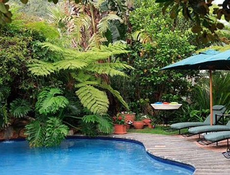 SA-GardenRoute-PalmsWildern.-ext and pool