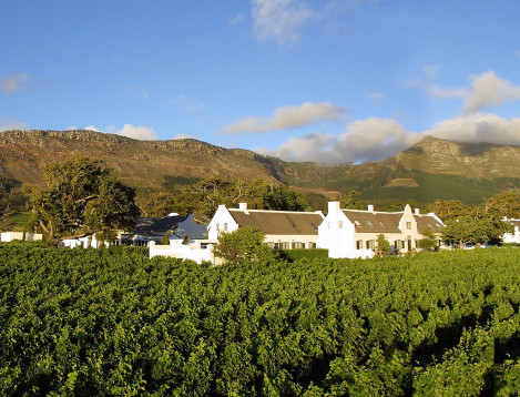 SA-Winelands-Steenberg-hotel__vineyards