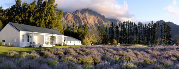 SA-Winelands-Lavender Farm GH-lux view suite - ext